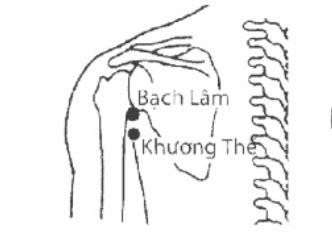 Huyệt Bạch Lâm