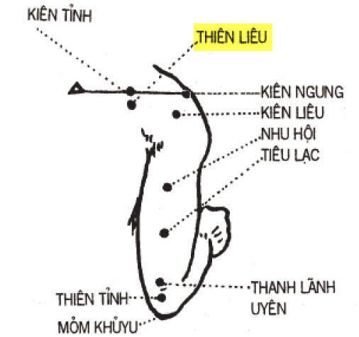Huyệt Thiên Liêu